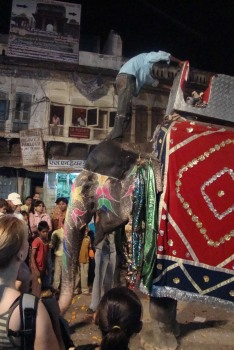 Photo of elephant in Pushkar market square 2010