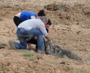Ostrich Rescue