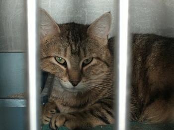 Reiki In The Cat Intake Room Shelter Animal Reiki Association
