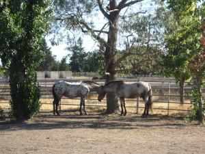Brighthaven Horses