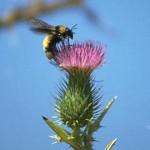 Bee 3