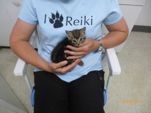Kitten receiving Reiki