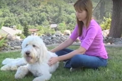 Healing Quest: Reiki for Animals