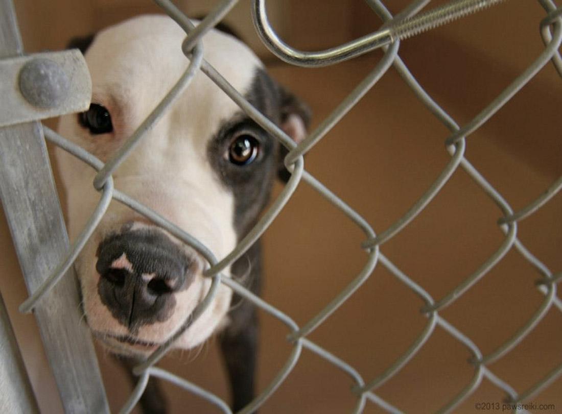 Shelter Animal Reiki Association _SARA16