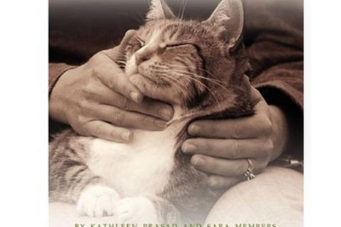 Shelter Animal Reiki Association: Changing the Story of Homeless Animals