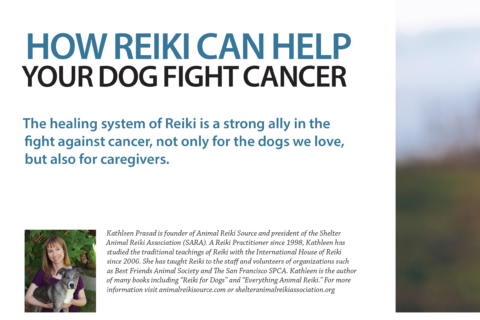 How Reiki Can Help Your Dog Fight Cancer