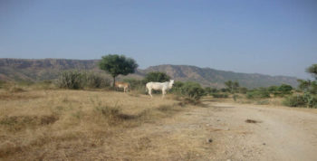 the land surrounding TOLFA