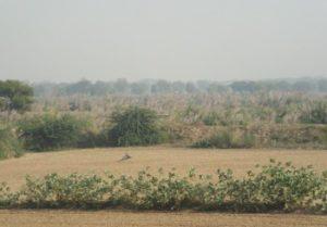 Wildlife SOS Grounds