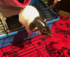 Rat Reiki and RattieRatz
