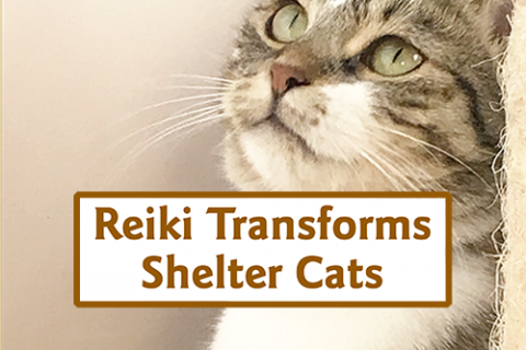 Reiki Transforms Shelter Cat