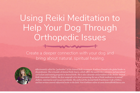 5 Ways Reiki Can Benefit Your Senior Dog and You