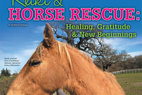 Reiki & Horse Rescue: Healing, Gratitude, & New Beginnings