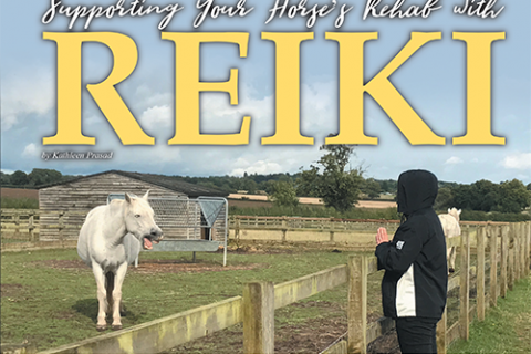 Supporting Your Horse's Rehab with Reiki