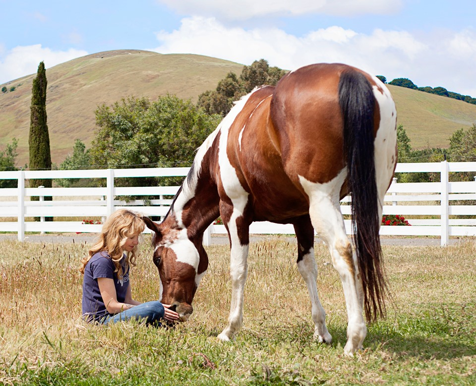 Recognizing Differences Between Animal Communication and Animal Reiki