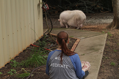 Wilbur, the pot-bellied pig