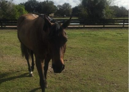 Whipper: A Horse That Learned to Trust Through Animal Reiki
