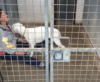 Deaf and Food Aggressive – Romanian Rescue Dog Finds Peace and Safety