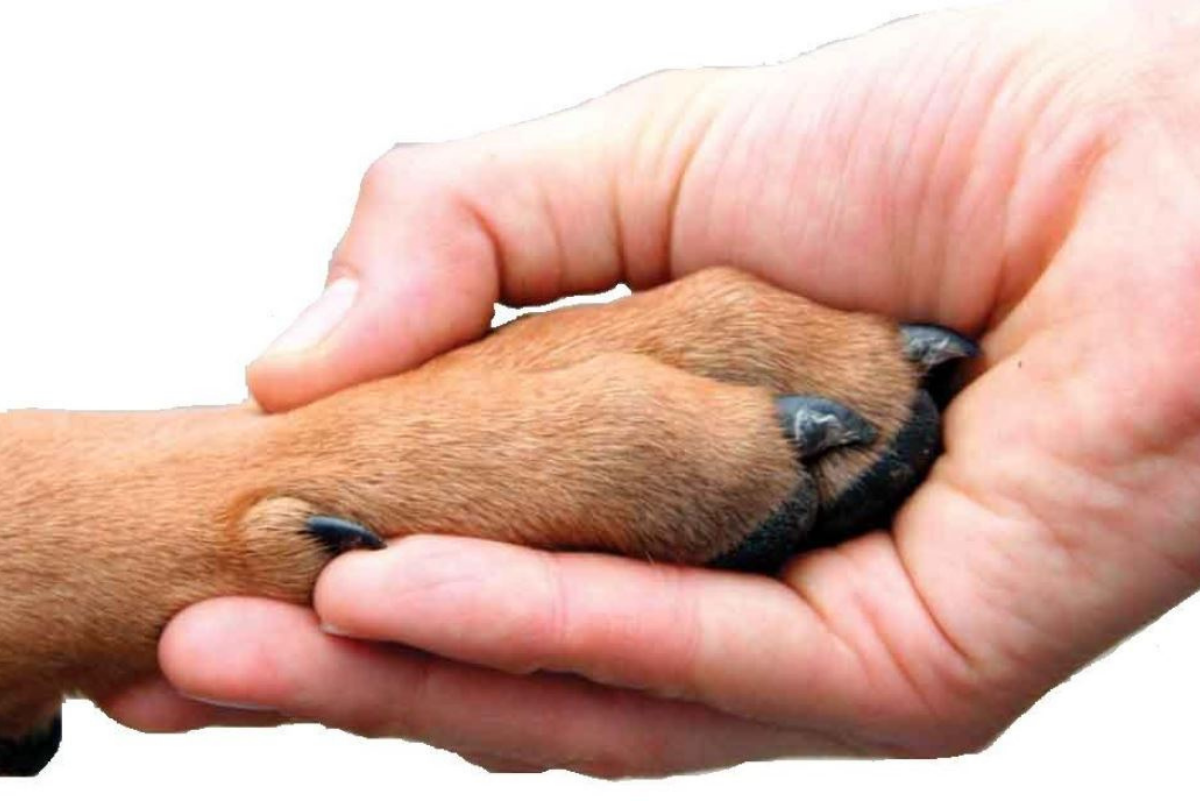 The Offer of a Paw – The Ultimate Show of Trust